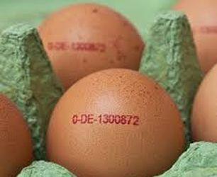 Eierkennzeichnung-CodeRevo-X-2-Kennzeichnungssysteme.jpg